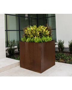 30 inches tall by 30 inches square weathered Cor-ten steel planter with yellow green plants in the planter box.